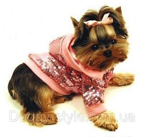 Фотографии Одежда для собак.