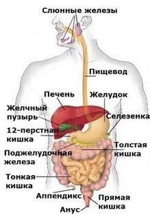 Что показывает общий анализ крови при заболевании печени
