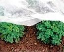 Агроволокно, спанбонд, plantex, agreen, защита от.